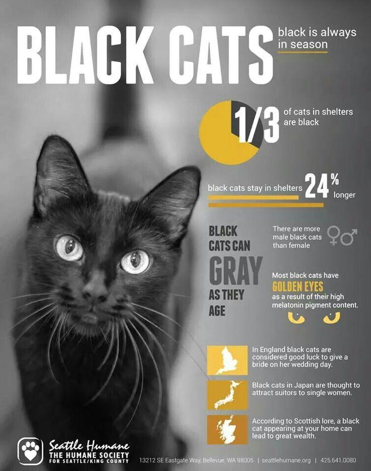Black cat fun facts