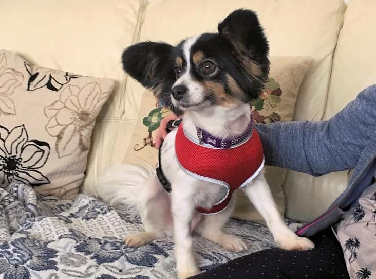 Trixi Find A Pet Rspca Org Uk Unusual Dog Breeds Rare Breed Breeds