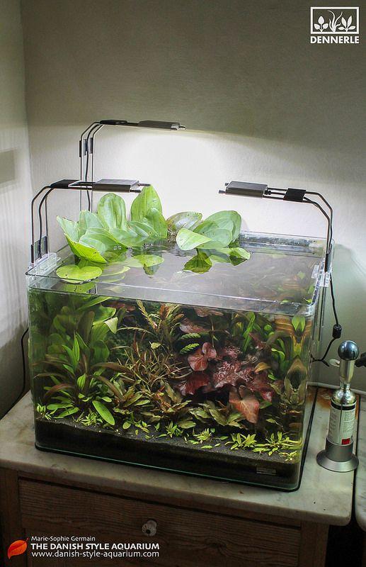 jade burgundy 50 l dennerle scaper 39 s tank jade. Black Bedroom Furniture Sets. Home Design Ideas