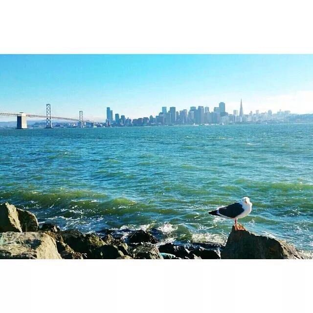 Tresure island, SF