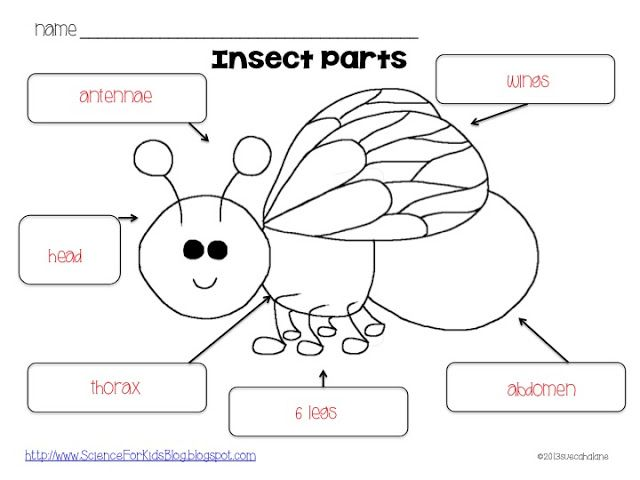 8 best insect life cycle lesson images on pinterest