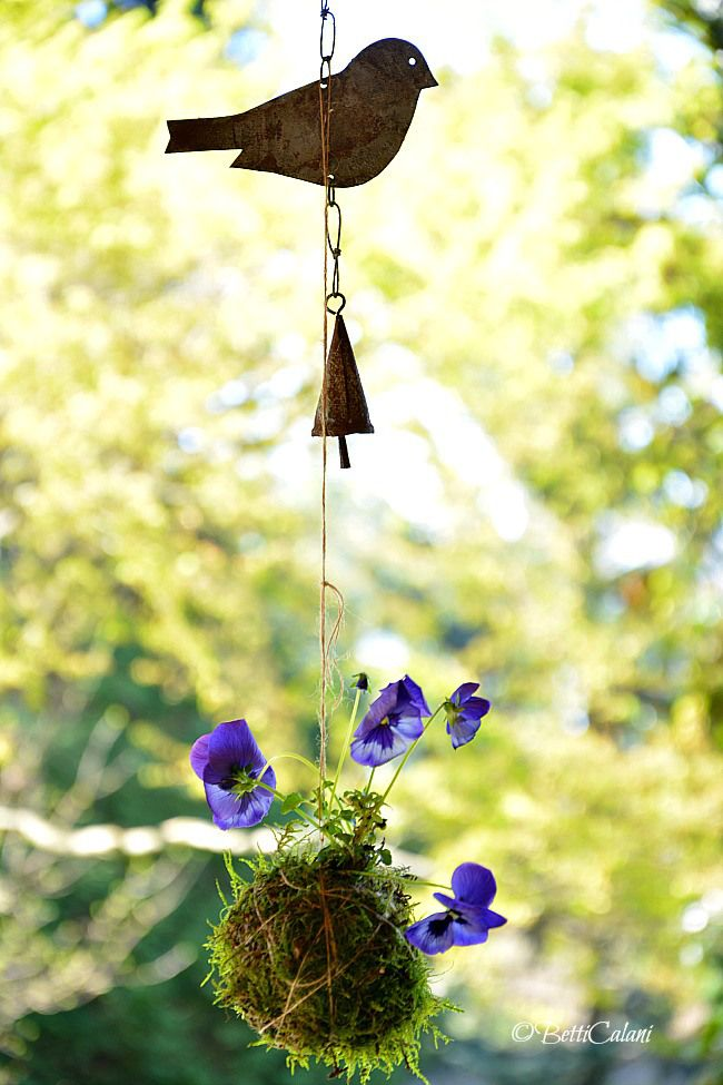1719 best images about pansies for dana on pinterest