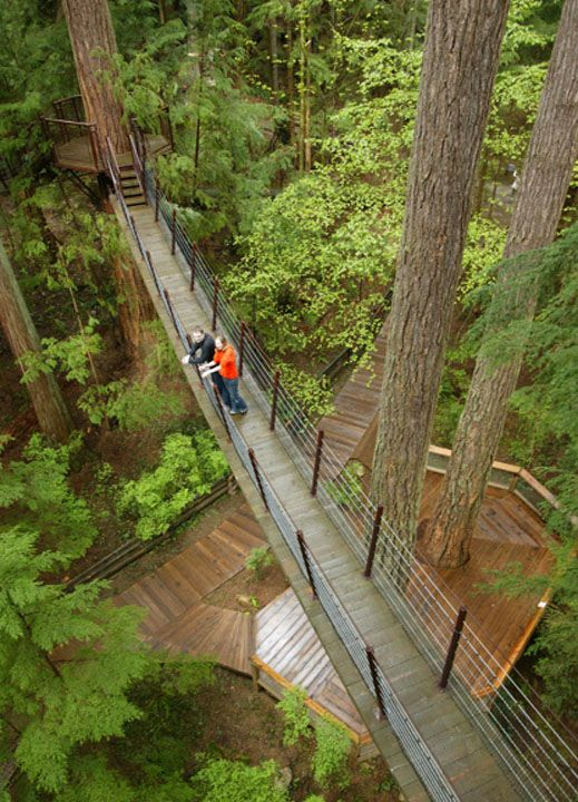 Treetops Adventure at the Capilano Suspension Bridge Park. Vancouver, British Columbia, Canada.