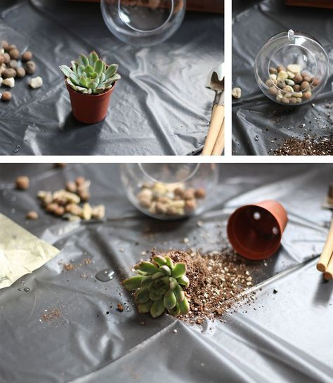 25 unique mini terrarium ideas on pinterest terrarium terrarium diy and succulent terrarium diy. Black Bedroom Furniture Sets. Home Design Ideas