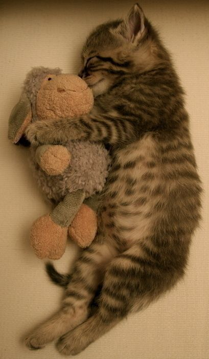 Snuggles, Stuffed Animals, Friends, Sweets, My Heart, Cuddling Buddy, Sleep, Baby Cats, Cute Kittens