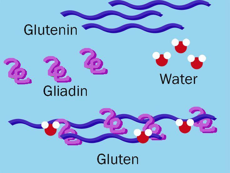 Glutenin Gliadin Water Gluten Service Dogs