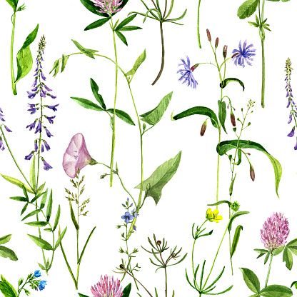 seamless pattern with watercolor drawing flowers and herbs vector art…