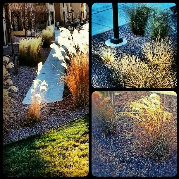 1000+ Images About Yards Scape Ideas On Pinterest
