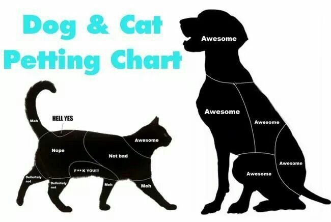 Dog & Cat petting chart Pet stuff Pinterest
