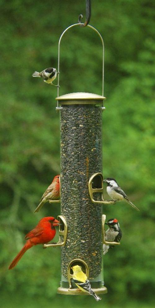 Die besten 25 vogelfutterhaus selber bauen ideen auf - Futterhaus selber ...