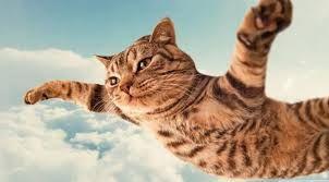 Image result for hewan lucu