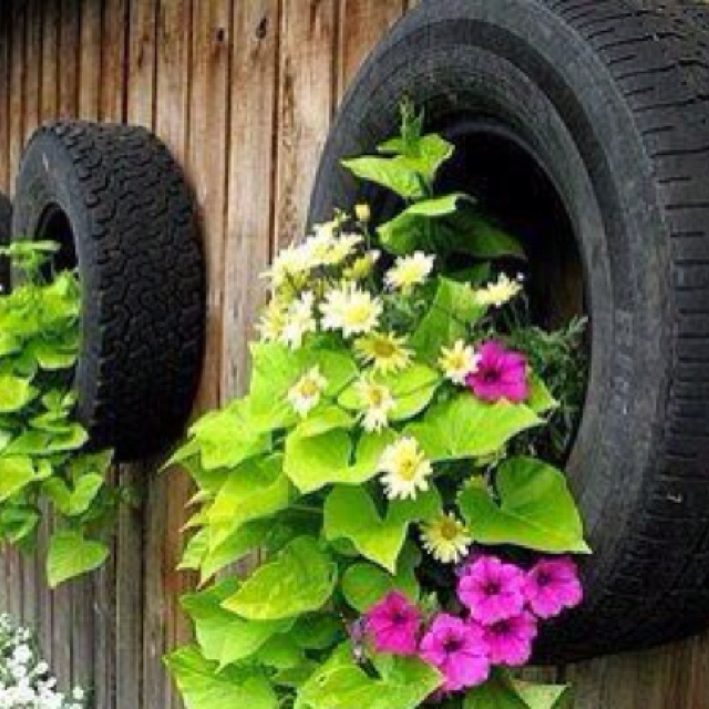 The HOA would crap their pants if I started planting in tires. This sure is a pretty plant combination.