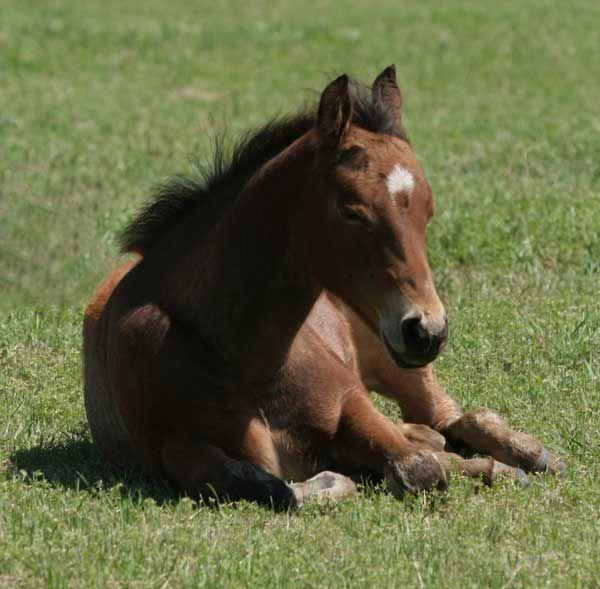 Veterinary Guide to Horse Breeding