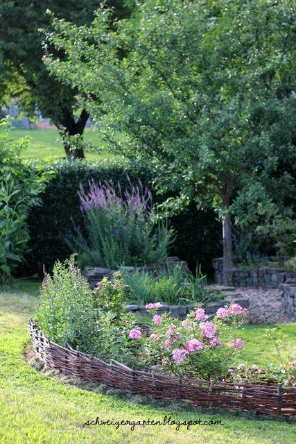 Mirabelle+von+Nancy+Hochstamm+Baum+Hausgarten++Weidenzaun+Blumenbeet+Mozart+Rose+Mulchen+Rasenkanten+biologisch+g%C3%A4rtnern+DIY+%285%29.JPG (427×640)
