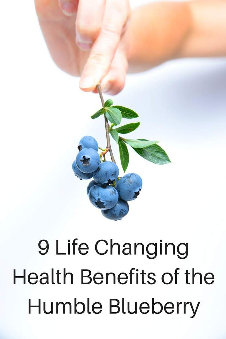 Blueberries are a recent addition to my diet because of how awesome they are for my health. It's hard to imagine such a humble little berry could have such a huge impact, but they really do. After reading this, you'll be picking yourself up a bunch of fresh, organic blueberries.