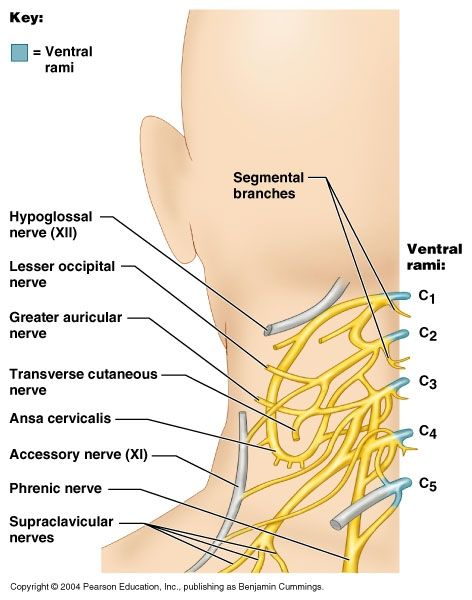 how to fix nerve damage in arm