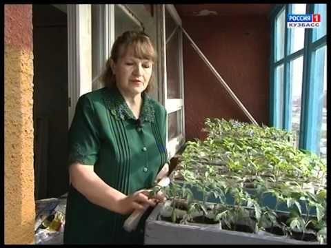 Свой метод выращивания рассады