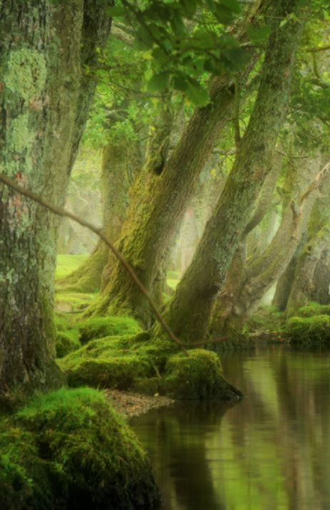 Morning mist Scotland.  By David Mould