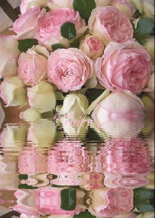 Lovely pale pink roses