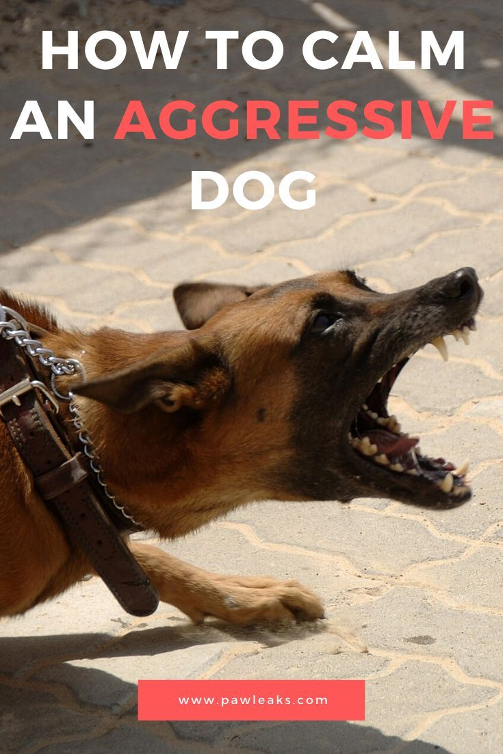 The Only Way To Calm An Aggressive Dog Aggressive Dog Protective Dogs Aggressive
