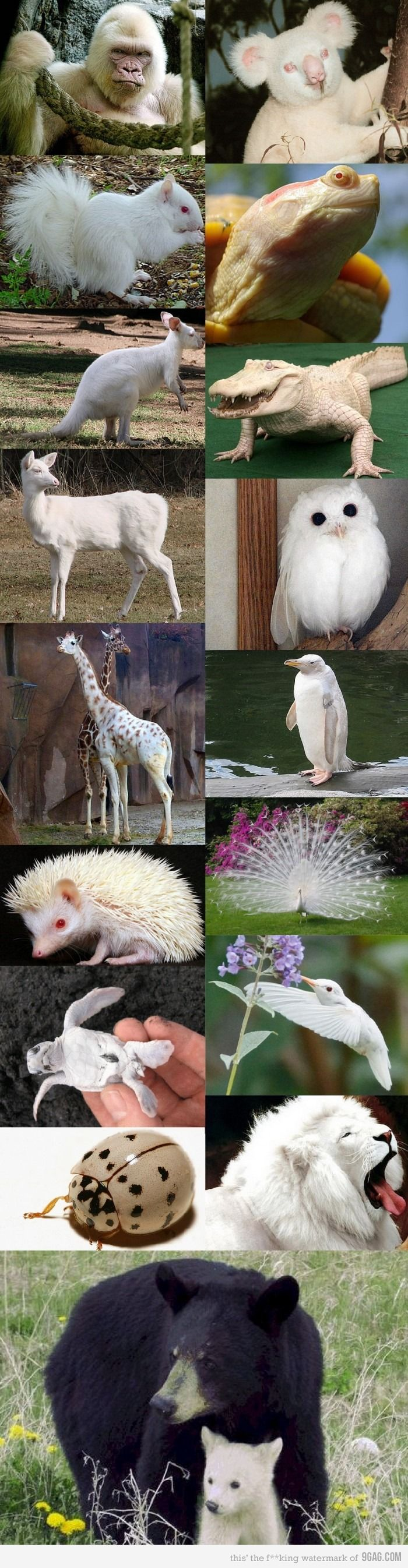 animales albinos - photo #42