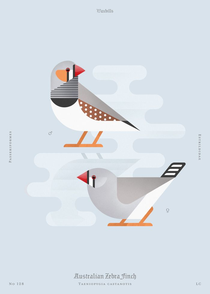 Australian Zebra Finch (dsc) Art Print by Aga Więckowska   Society6
