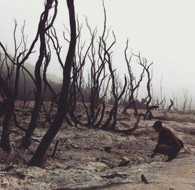 Dead Forest at Mount Papandayan, West Java, Indonesia