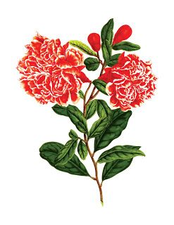 Free vintage cliparts and ephemera scans.: Vintage flower illustrations from an 1850's French botanical book