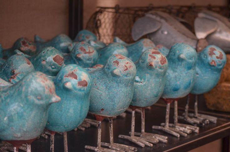 Pájaros turquesa