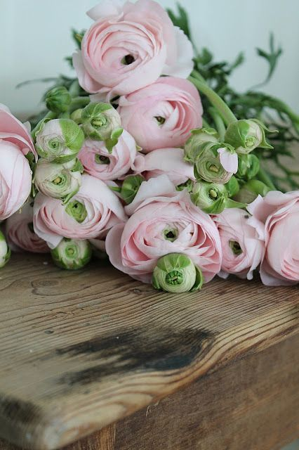 Pink Ranunculus. I had these in my wedding bouquet. my favourite flowers. ❤