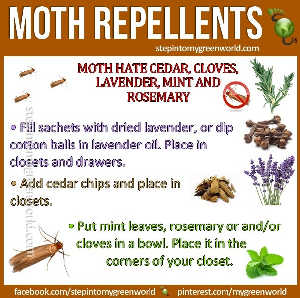 Moth repellents