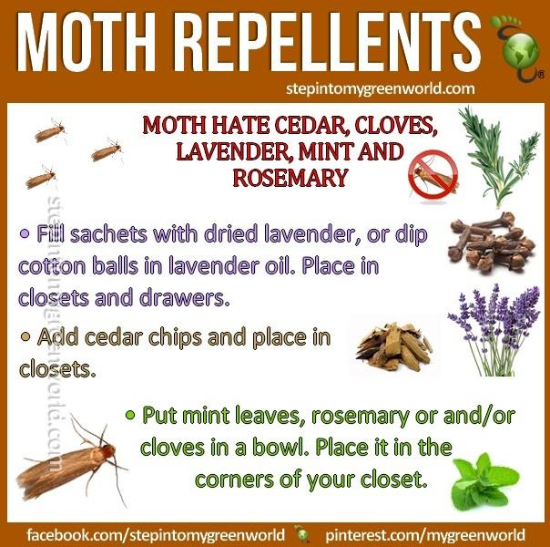 Moth Repellents Moth Repellent Getting Rid Of Moths Moth