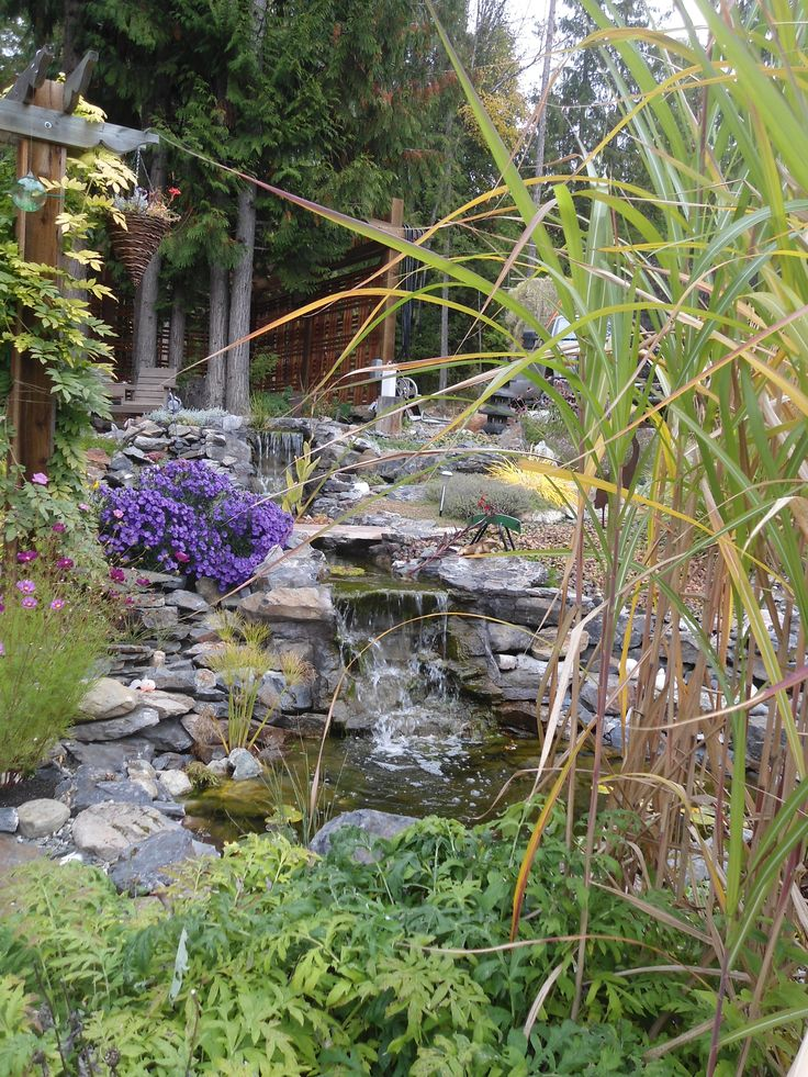 17 best ponds by blue valley aquatic images on pinterest for Koi pond kelowna