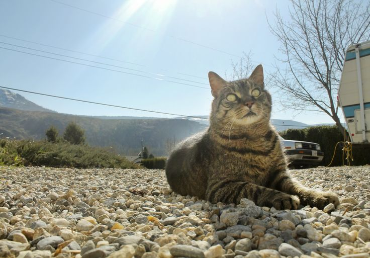 #cat #kitty #cute #photography #sunnyday #mycat