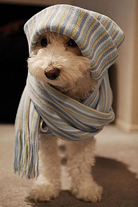 hipster puppy: Winter, Sweet, Dogs Fashion, Lyme Disea, Pet, Puppys, Scarfs, Cute Dogs, Animal