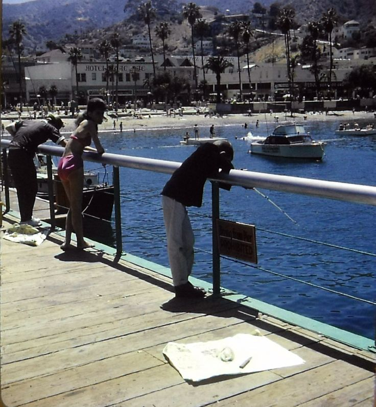 82 best images about catalina island on pinterest for Fishing in los angeles