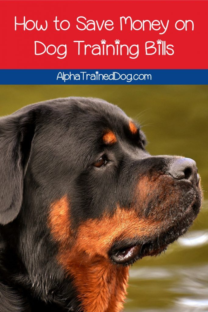 Want To Know How To Save Money On Dog Training Bills Check Out