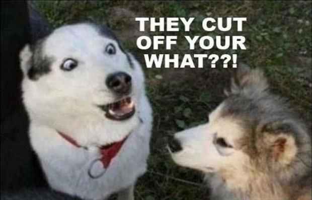 Funny dogs – They cut off your WHAT!: Funny Pics, Funny Dogs, Funny Animal Pictures, Funny Humor, Funny Pictures, Friday Funny, Funny Stuff, Humor Quotes, Moon Moon