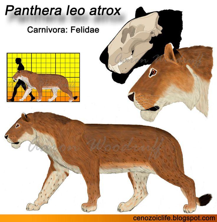 Panthera leo model by CenozoicKing