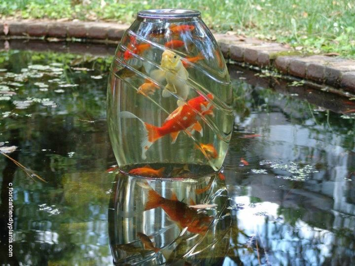If I ever have a pond with fish again I want to try it. It would probably drive my cats crazy though LOL  (Use a heavy glass vase and invert it on some concrete blocks so they can swim in from the bottom. Submerge the vase and turn it up under water so the vacuum created keeps the water inside. Make sure you have a heavy glass container or the weight of the water will shatter it.)
