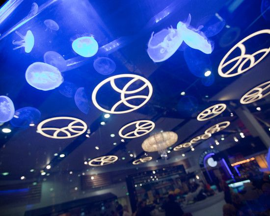 Amazing Ceiling Decoration With Blue Lighting Design Combined With Jelly Fish Decor In Chaobaby Birmingham Restaurant Finished In Modern Sty...