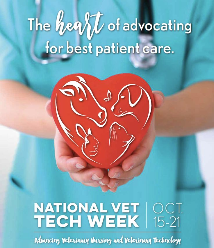National Veterinary Technician Week is October 15-21, 2017 | National Association of Veterinary Technicians in America #VetTechLife