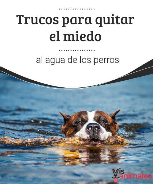 Trucos para quitar el miedo al agua de los perros  Encuentra en este artículo algunos consejos para que tu perro le pierda el miedo al agua. Sencillas técnicas que ya puedes poner en práctica con tu mascota.