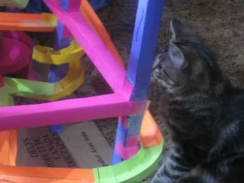 Sherlock Playing with a Paper Roller Coaster.AVI