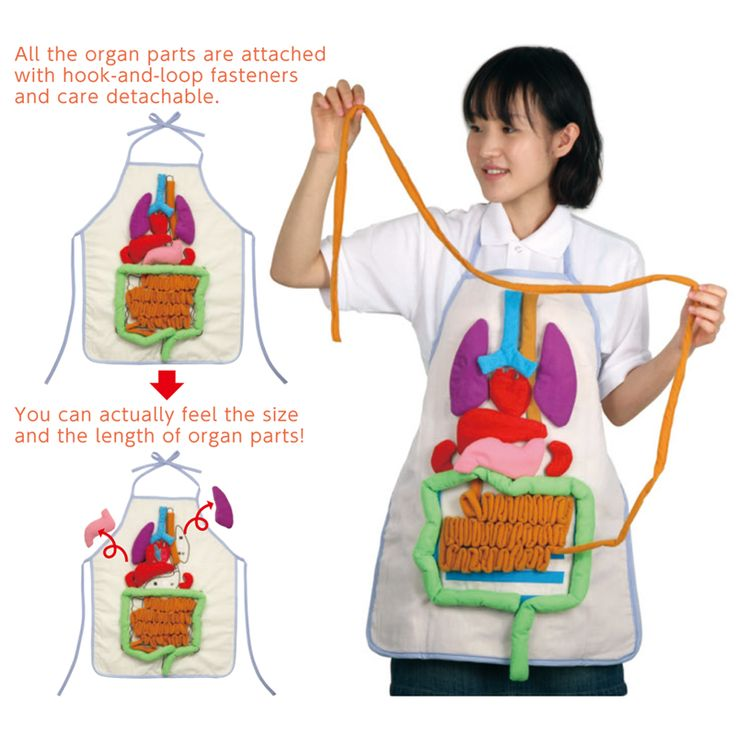 3D anatomy apron with removable parts