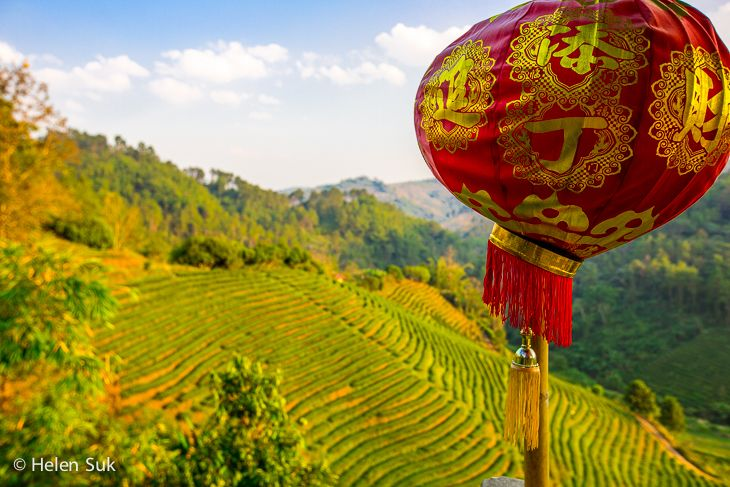 Mae Salong in northern Thailand is Chinese in character and a tea lover's paradise where you'll find lush tea plantations.