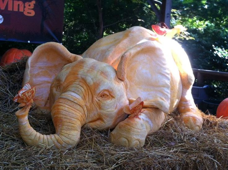 Baby elephant and butterflies carved from 600 pound for How to carve an elephant on a pumpkin