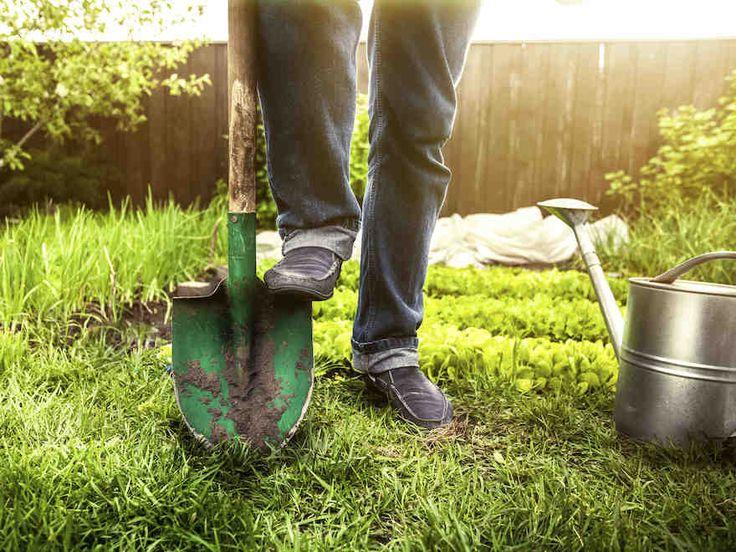 Kevät ja kesä ovat puutarhurille ihaninta, mutta myös työläintä aikaa. Tarkasta Yhteishyvän puutarhakalenterista, mitä pihalla tulisi tehdä eri vuodenaikoina.