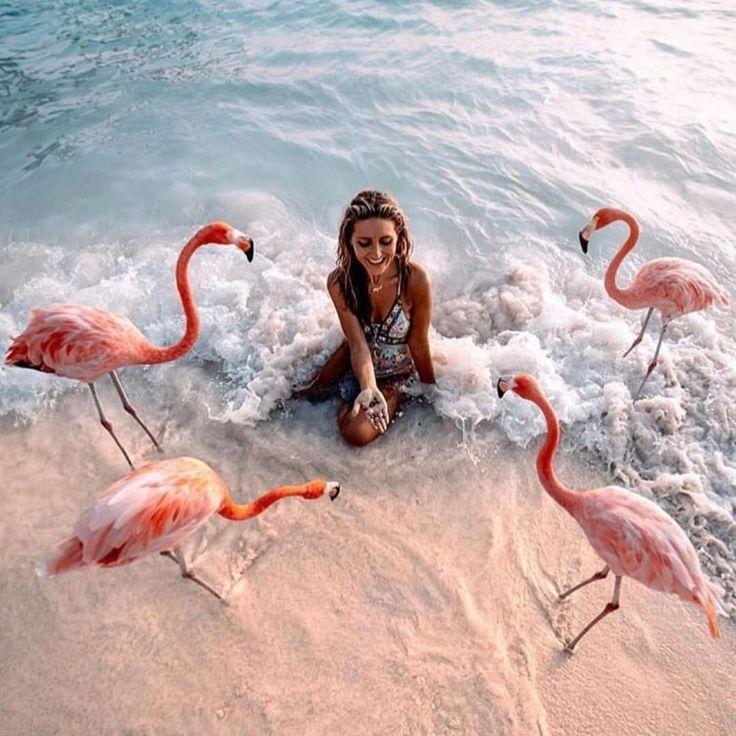 фламинго картинки и человек есть шанс, что
