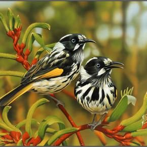 New Holland Honeyeaters, a honeyeater species found throughout southern Australia.